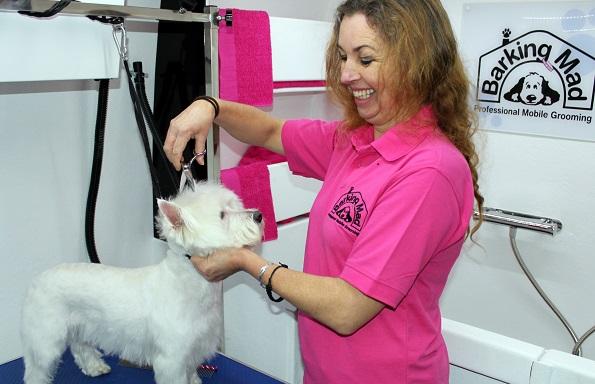 Professional Mobile Dog Grooming Dog Washing Nail Clipping Barking